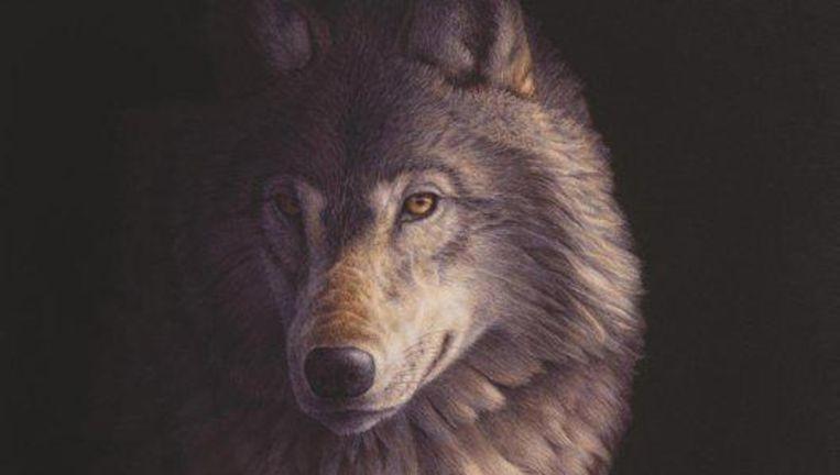 De Kinderen van de Nacht; over wolven en mensen