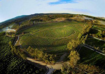 The Biggest Little Farm 4